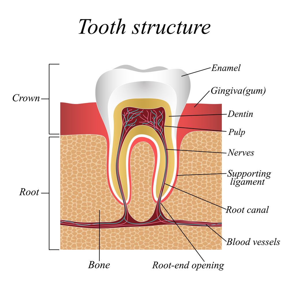 root-canal-dentist-sumner-wa